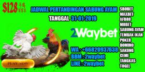 Jadwal-sabung-ayam-31-01-2019