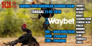 Jadwal Pertandingan Sabung Ayam 21-02-2019