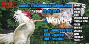 Jadwal Pertandingan Sabung Ayam 22-02-2019