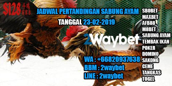 Jadwal Pertandingan Sabung Ayam 23-02-2019