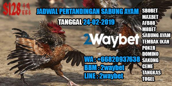 Jadwal Pertandingan Sabung Ayam 24-02-2019