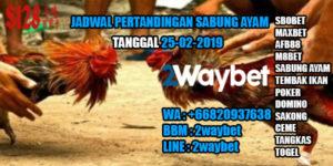 Jadwal Pertandingan Sabung Ayam 25-02-2019