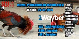 Jadwal Pertandingan Sabung Ayam 28-02-2019