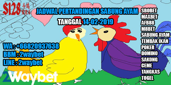 Jadwal Sabung  ayam online 14-02-2019