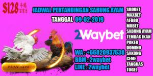 Jadwal pertandingan sabung ayam 09-02-2019