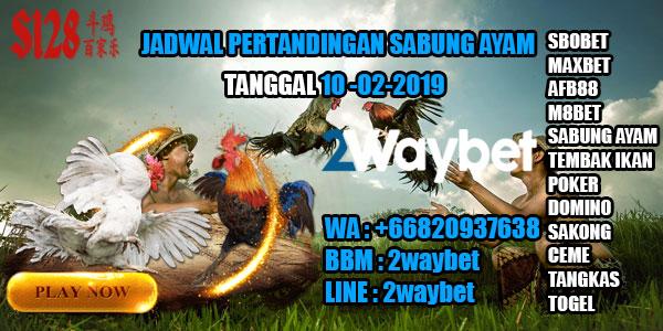 Jadwal pertandingan sabung ayam 10-02-2019
