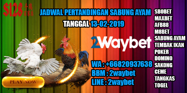 Jadwal pertandingan sabung ayam 13-02-2019