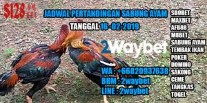 Jadwal pertandingan sabung ayam 16-02-2019