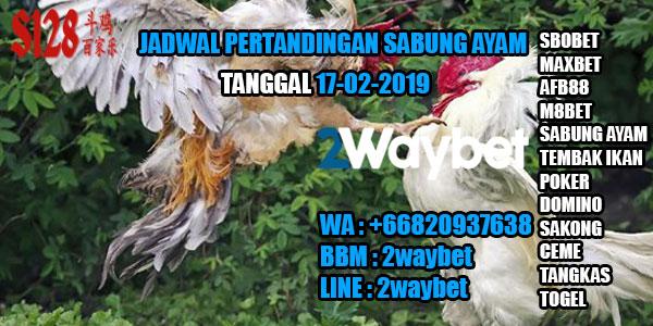 Jadwal pertandingan sabung ayam 17-02-2019