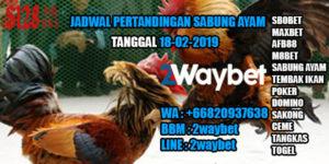 Jadwal pertandingan sabung ayam 18-02-2019