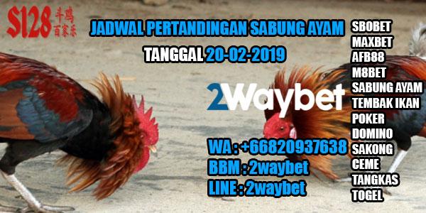 Jadwal pertandingan sabung ayam 20-02-2019