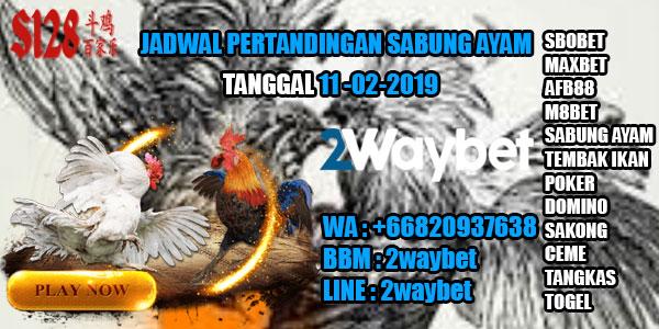Jadwal Sabung ayam hari in 11-02-2019