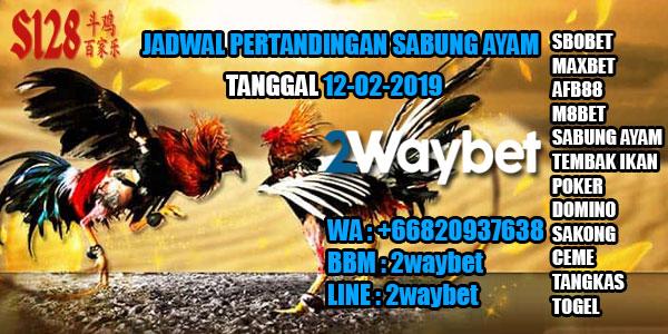 Jadwal sabung ayam hari ini 12-02-2019
