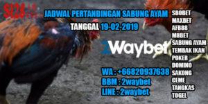 Jadwal sabung ayam s128 19-02-2019