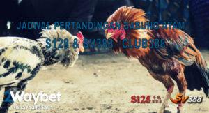 Jadwal Pertandingan Sabung Ayam Online S128 dan SV388 26/11/2019