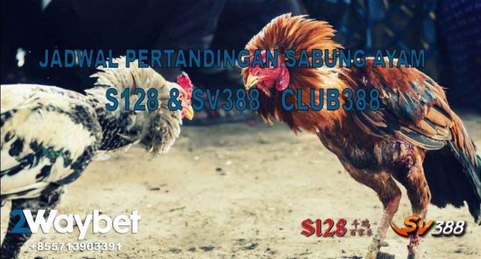 Jadwal Pertandingan Sabung Ayam Online S128 & SV388 Tanggal 15-16-2019 ( Hari JUMAT)