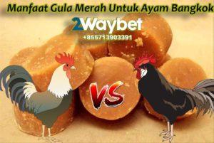 Manfaat Gula Merah Untuk Ayam Tarung