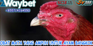 Obat Mata Yang Ampuh Bagi Ayam Bangkok