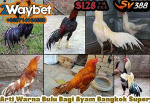 Arti Warna Bulu Bagi Ayam Bangkok Super